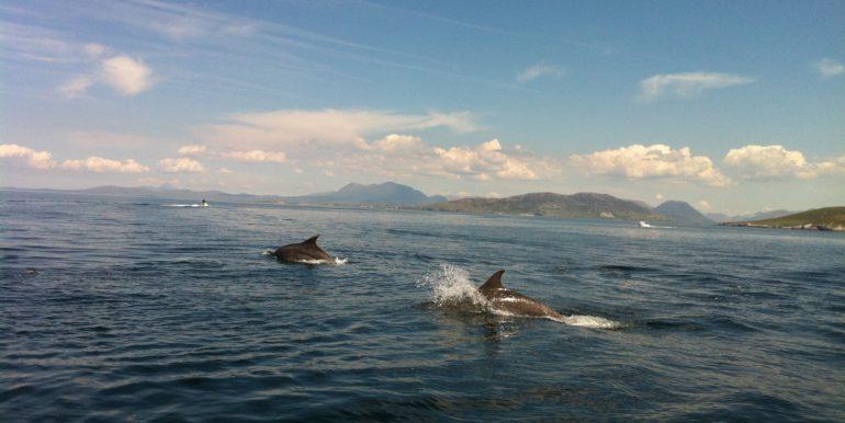 cleggan bay dolfhins